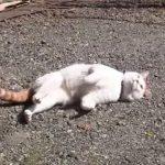 こっそりネコが外でゴロゴロしているのを撮影♪