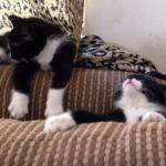 ウトウトしながらハッっと気づく猫ちゃん、何度も繰り返す(^◇^)