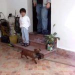 子供にじゃれてる子猫を連れて帰るワンちゃん