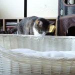 ワンちゃんと猫さんに夏用ベッドを用意してみたら、対照的な結果に・・・