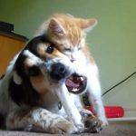 ホネを噛んで遊んでいる犬と、ワンちゃんに遊んで欲しいネコ