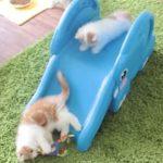 滑り台で遊ぶ子猫達にメロメロ♡