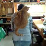 いつも一緒にいたいニャン、甘えん坊のおんぶキャット