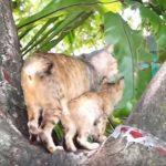 木登りの練習をする親子猫