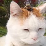 か~え~る~の歌が~、頭の上から聞こえてきても全く動じないネコちゃん