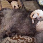 3匹の保護された子猫ちゃん、先住犬と夫婦の献身的な介護によって回復する
