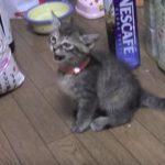 「お皿が空ですニャ~」アピールする子猫ちゃん