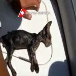【感動】 海に浮かぶ子猫、沿岸警備隊の救出劇