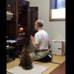 お経をあげている横でジッっと聞いている猫さん