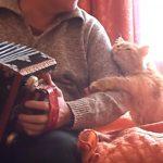 アコーディオンを演奏する飼い主さんに甘える猫ちゃん