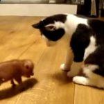 子ブタと子猫ちゃんのご対面♪