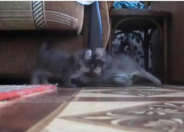前方不注意で出合い頭にぶつかる子猫事故
