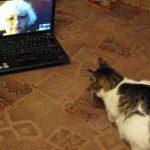 飼い主さんとビデオチャットをして安心する猫ちゃん