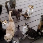 裏口を開けると、いつも猫ちゃんが待っている家