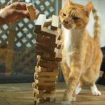 思わず「あぁぁぁぁ!」猫ちゃんのやらかしちゃった映像集