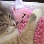 うさぎの人形を抱きしめながら寝るニャンコ