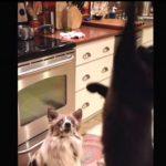 猫ちゃんのおやつキャッチがまさかの展開に・・・