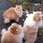 4匹のペルシャ猫を釣ってみた♪