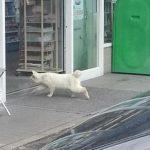 猫ちゃん「ちょっとコンビニで猫缶買ってくる」・・・結果 【猫画像】