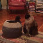 ネコ壺から飛び出して驚かせようとする子猫ちゃん♪