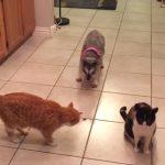ネコの集団の中からおやつを盗むワンちゃんの動きがカワイイ