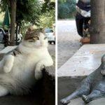 トルコの有名な腰掛け猫ちゃん、銅像になって見守る