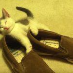 くつに持たれて寝るネコちゃん