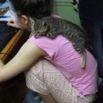 パソコンを触る女の子の背中にべったりくっつく猫ちゃん
