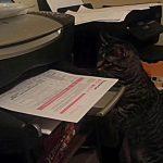 [我慢] プリンターから紙が出てくるのを見つめるネコ