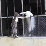 [感動] なかなか家に入れない子猫を、母猫が全身を使って助け出す