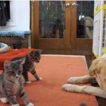 「あっ・・・・・」 はじめて大きなワンちゃんと出会う子猫達