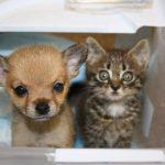 瀕死の状態だった子犬をシェルターで保護、子猫と対面させたら大親友になる(^◇^)