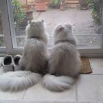 お外を一緒に眺めるとっても仲の良い親子猫♪