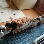 ストーブの前で仲良く並んで暖をとる猫ちゃん達 【猫画像】