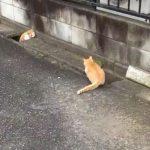 「こっちニャ~」排水溝での猫の追いかけっこが可愛すぎる(=^・^=)
