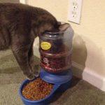 ご飯の時間ですよ~~~!えっ・・・・【猫画像】