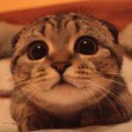 獲物を狙う猫ちゃんがどんどん可愛くなってゆく