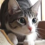 獲物をロックオンすると黒目が大きくなる猫さん