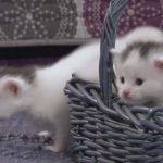 里親の元に連れられてきた3匹の子ネコが、おるおそる探検に出る