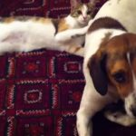 犬猫が仲良くまったりしていたら、急に変な遊びを思いついたニャンコ♪