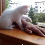 窓から手を出すと、「あぶないニャっ」と手を戻す、心やさしい子ネコ