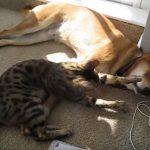 寝ているワンちゃんにイタズラする猫ちゃん♪