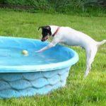 [23秒] プールに落ちたボールが取れそうでとれないワンちゃん、さてどうなる?