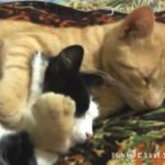 【仲良し】ギュ~ッ、後ろから抱きしめるネコ