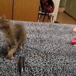 [3秒] ネコがくしゃみをすると・・・?