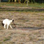 公園で犬の散歩をする・・・ネコ
