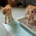 保護された4匹の猫ちゃん、初めての大人猫との対面に固まってしまう