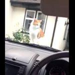 [4秒] ボンネットでくつろぐ猫ちゃん、車が出せないのでクラクションを鳴らすと・・・
