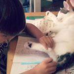 ノートの上でぐっすり寝ている猫ちゃん、邪魔だけどどかせる事ができない優しい子供(^◇^)