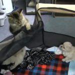 「この隙に逃げるニャ~」 ケージの中のワンちゃんを脱走させる猫ちゃん